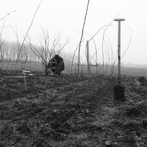 Plantations le blog de la tournichette - Repiquer des framboisiers ...