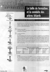 La taille de formation et la conduite des arbres têtards (1)