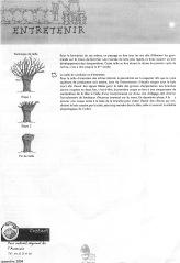 La taille de formation et la conduite des arbres têtards (2)
