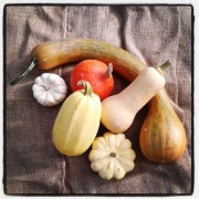 Courges diverses, dont la butternut