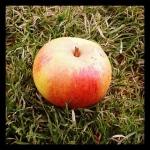 Pomme reinette Descardre