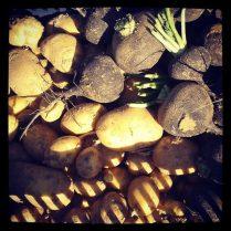 Pommes de terre & radis noirs