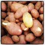 Pommes de terre Désirée et Ditta : cherchez l'intrus !
