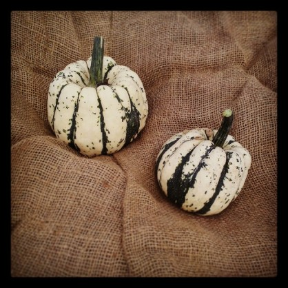 2 courges patidou