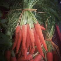 carottes-botte