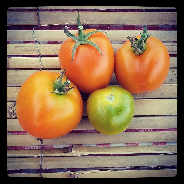 tomates-auriga