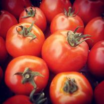 tomates-rouges