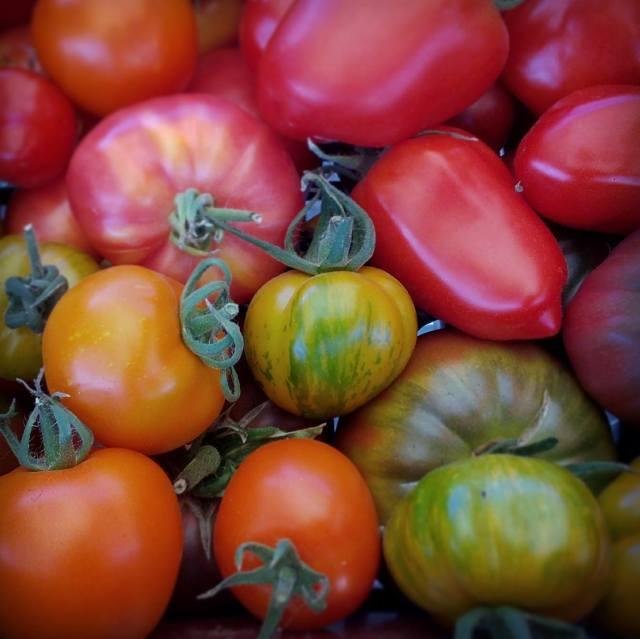 tomates variété anciennes