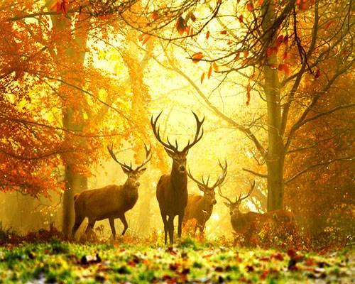 cerfs dans une forêt en automne